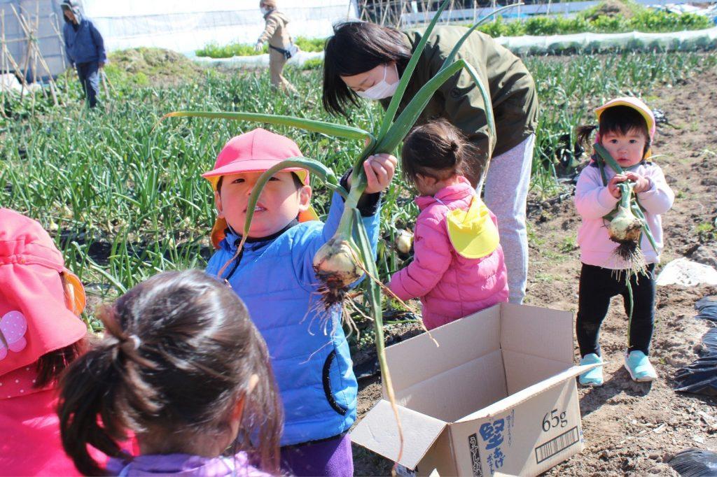 畑の作物の収穫体験